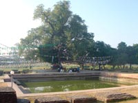 The Pushkarini Pond and the Nativity Tree at Buddha's birth place